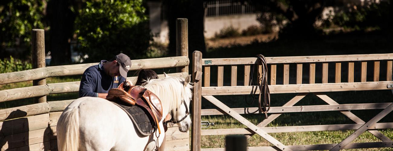 Pensions pour chevaux à Lavérune, Montpellier...