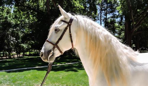 Taison-elevage-de-biar-pension-chevaux-montpellier-laverune-3