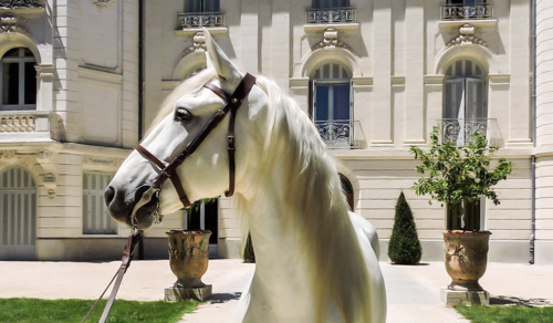 Taison-elevage-de-biar-pension-chevaux-montpellier-laverune-4