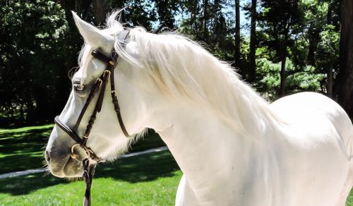 UPSA-elevage-de-biar-pension-chevaux-montpellier-laverune-3