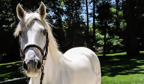 UPSA-elevage-de-biar-pension-chevaux-montpellier-laverune-4