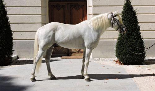 Vango-elevage-de-biar-pension-chevaux-montpellier-laverune-2