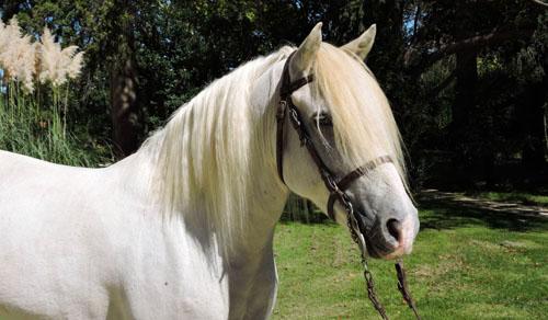 Vango-elevage-de-biar-pension-chevaux-montpellier-laverune-3