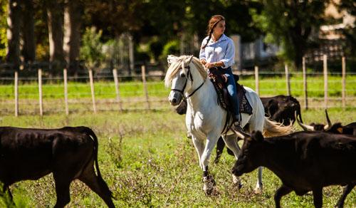 Vango-elevage-de-biar-pension-chevaux-montpellier-laverune-manade-4