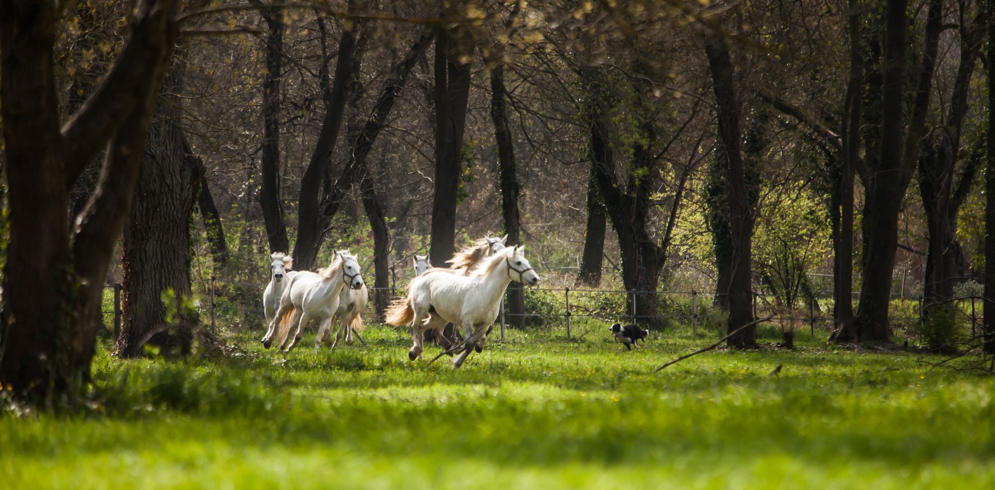 Structure sociale des chevaux à l'état naturel
