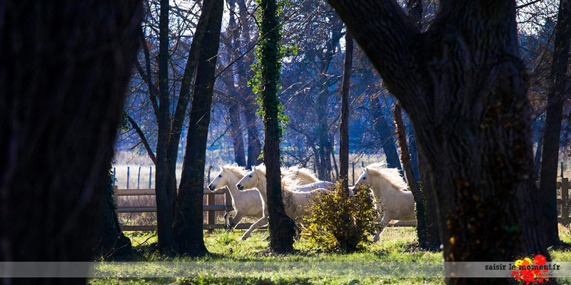 pension-chevaux-montpellier-camargue-cheval-shooting-photo